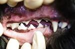 Tierarzt Hachenburg Gerhardus Kleintiere kardiologie Zahnheilkunde Chirurgie Hund Katze