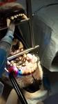 Tierarzt Hachenburg Westerwald Gerhardus Zahnheilkunde Hund Katze Kleintierpraxis