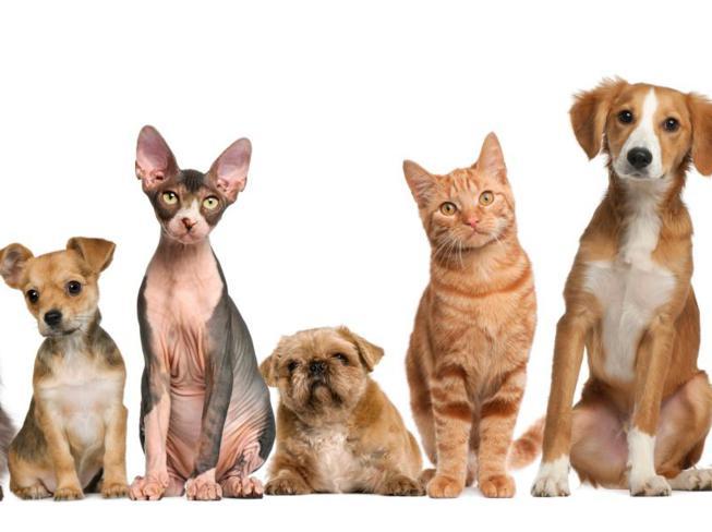 Tierarzt Hachenburg Gerhardus Kleintiere Hund Katze